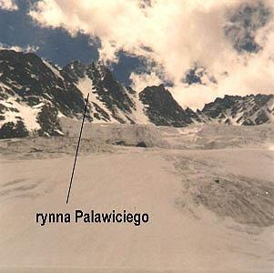 Rynna Palawiciego